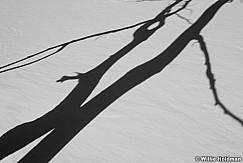 ShadowtreesBW1101710 30
