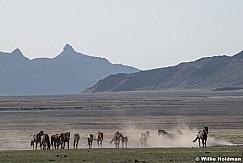 Wild Horse Frolic 051621 8293