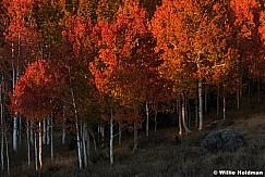 Red Boulder Aspens 100616 2027 4 1