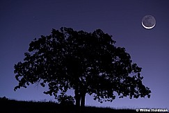 Lone Oak Tree Crescent moon 092619 1946 2 2