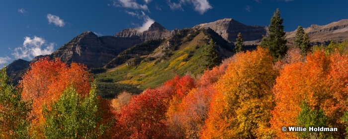 Red Maples Timp pan092313