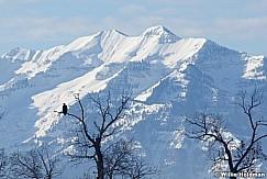 eaglescascade120510 21