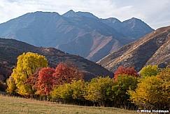 Timpanogos Autumn Color 100820 5429 4