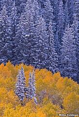 Snow Aspens Pines 092613 5549