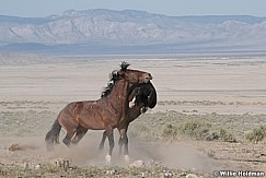 Mustang Fight 051621 9831
