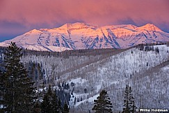 First pink light on timpanogos from center cree, uinta forest