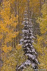Lone Winter Pine 092613 56 54