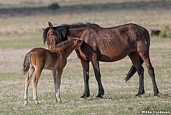 Reachong Out Foal 051621 8170