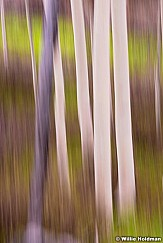Aspen Abstract impressionistic, greens and browns