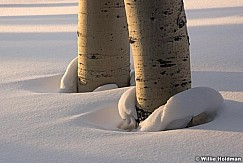 Aspens Snow Rings 012817 2121
