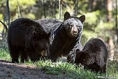 Mama Cubs 050817 3959