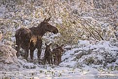 Mom Baby Moose 060720 9256