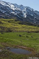 Spring Greens Timpanogos 051517 8253 2