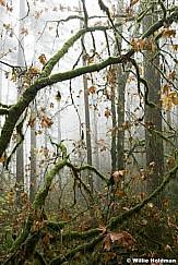 Misty Path Oregon 102616 7260