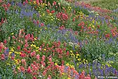 Timpanogos Wildflowers Meadow 072321 8580 8642