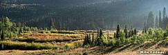 Misty Pines 082515