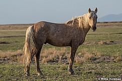 Wild Horse Portrait 051621 8358