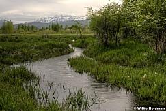 Timpanogos River Bottoms 0517