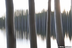 Aspen Lake Abstract 060518 9499