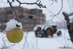 Tractor Snow Orchard 122515 1387