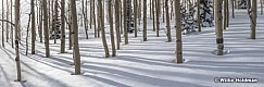 Aspen winter forest 01017 7708 20x60
