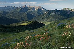 Mary Ellen Ridge Line with wildflowers and timpanogos, American Fork Canyon