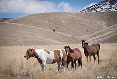 Wild Horses Paint 040320 0818 2