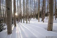 Aspen Forest Winter 030717 9801