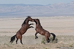 Mustang Fight 051621 9847