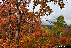 Cascade Mountain Aspen 092216 5952