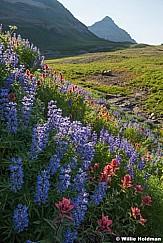 Timpanogos Wildflowers 080116 6611 6611