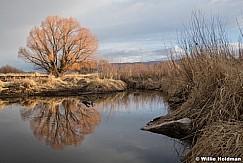 Orange Tree Reflection 021121 2078 2