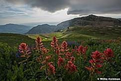 Timpanogos Basin Wildflowers 081417 0199