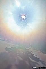 Sun Star Pine Winter 112410 70