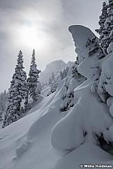 Powder Frosty Trees 111020 1316 5