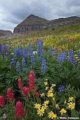 Timpanogos Wildflowers 083017 F2