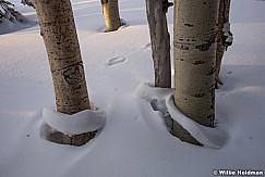 Aspens Snow Rings 012817 2110