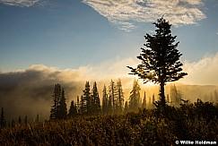 Lone Pine Mist 082945 7186