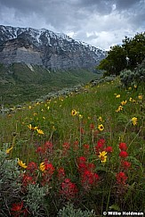 Cascade Wildflowers 051717 9069 2