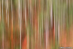 Aspen Trunk Abstract 091920 8876 4