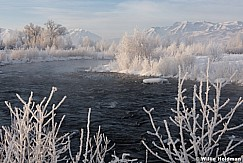 Frosty Trees Provo River 011316 9667