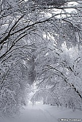 Path Frosted Trees 010517 9140 4