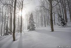 Winter Snow Aspens 010117 7768