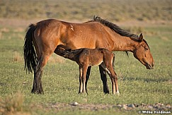 Wild Horse with Foal 051621 8484