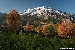 Maple Trees Timpanogos 092517 4803