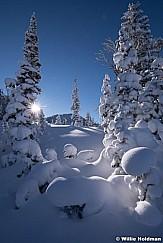 Powder Tree 120418 9247 5