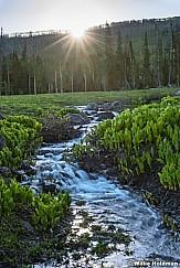 Skunk Cabbage Stream 061017 3816