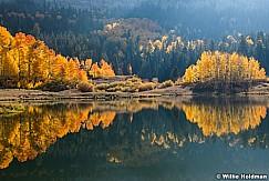 Autumn Aspens Reflection 100420 3704 2
