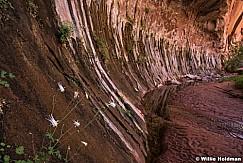 Escalante Choprock Canyon 060516 1228
