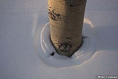 Aspens Snow Rings 012817 2138
